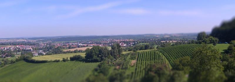Landschaft im Kraichgau - Weinkorn